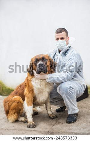 Veterinarian inspects and controlling  a dog.