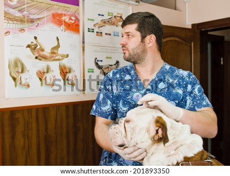 veterinarian inspects mouth of dog in veterinary station - stock photo
