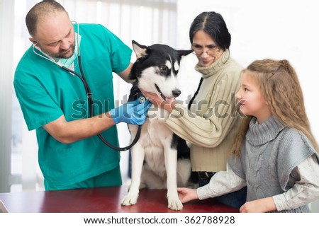Veterinarian is examining a cute siberian husky with his owners at hospital. - stock photo