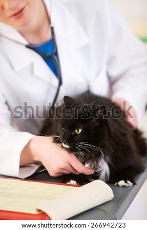 Veterinarian: Listening to Cat Heartbeat