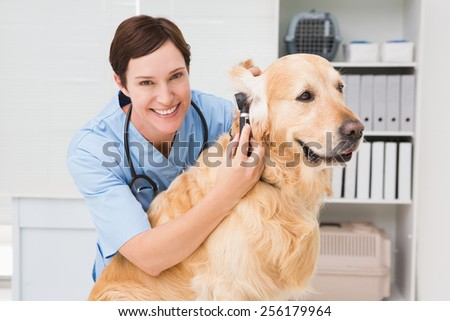 Veterinarian using otoscope to dog in medical office - stock photo