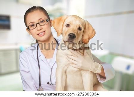 Veterinarian, vet, pet. - stock photo