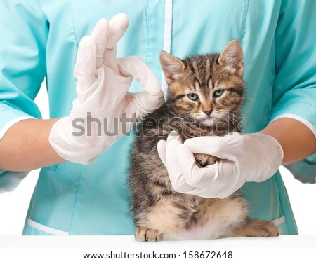 Veterinarian with a kitten in hands shows gesture Okay concept