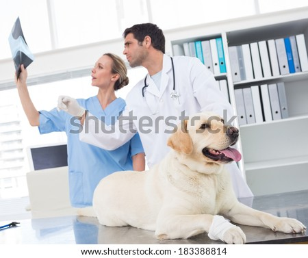 Veterinarian with colleague discussing Xray of dog in clinic