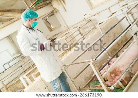 Veterinarian with tablet ready for examination at pigsty. - stock photo