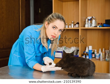veterinarian woman and cat in the veterinary station - stock photo