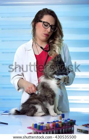 veterinarian woman checks the pomeranian dog in the Pet Clinic / veterinarian girl with pomeranian spitz dog at vet clinic - stock photo