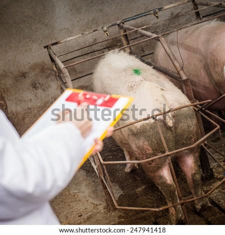 Veterinarian woman on farm.  - stock photo