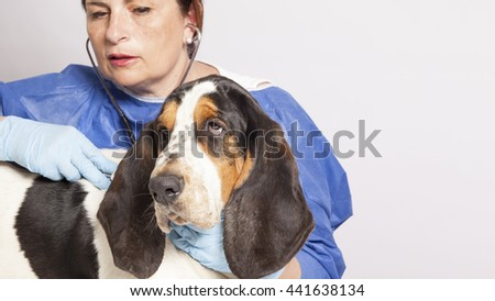 veterinarian woman with bassethound dog