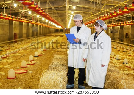Veterinarians talking inside of chicken farm.Shallow doff - stock photo