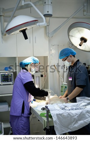 Veterinarians with dog on operating table