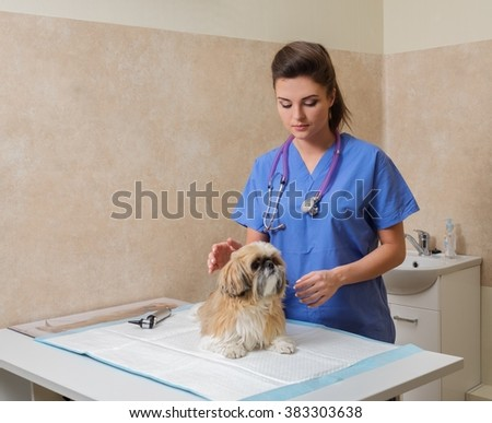 Veterinarien examining Yorkshire terrier in veterinary clinic. - stock photo