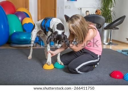veterinary - stock photo