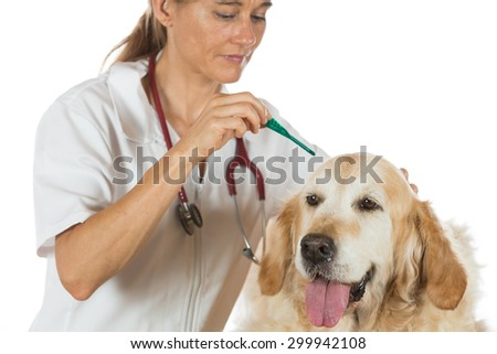 Veterinary antiparasitic placing a pipette into a golden retriever in the consultation
