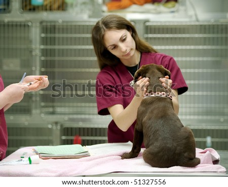 veterinary assistant prepares a vaccine shot