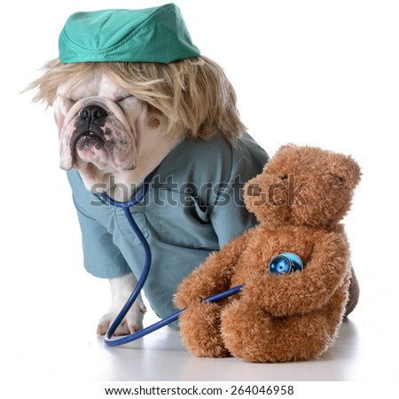 veterinary care - bulldog dressed like a doctor listening to the heart of a stuffed teddy bear - stock photo