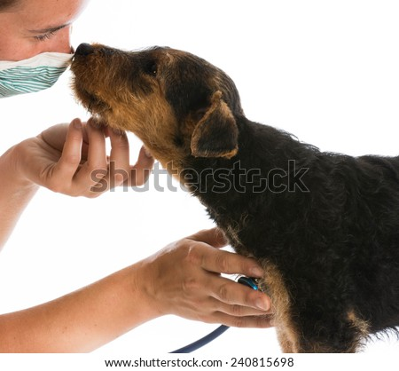 veterinary care - stethoscope on the heart of a airedale terrier puppy - stock photo