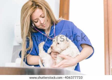 Veterinary checking a dog puppy in her studio