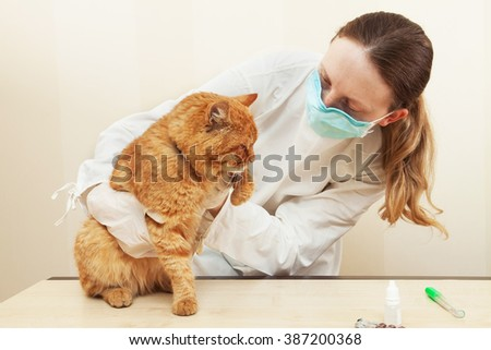 Veterinary clinic. Cute cat during examination by a veterinarian. - stock photo