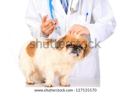 Veterinary concept. Dog and vet isolated over white. - stock photo
