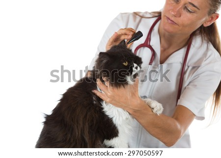 Veterinary conducting a review of ears of a cat in clinic