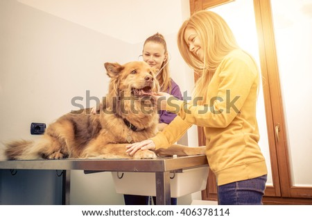 Veterinary doctor checking dog heart with medical tool. Owner comforting the animal - stock photo