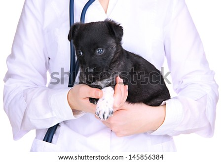 Veterinary doctor holding puppy isolated on white - stock photo