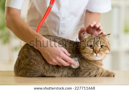Veterinary doctor pet checkup with stethoscope - stock photo