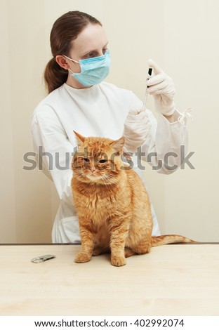 veterinary giving the vaccine to the ivory red cat