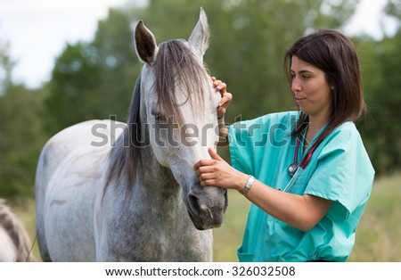 Veterinary great performing a scan to a young mare - stock photo