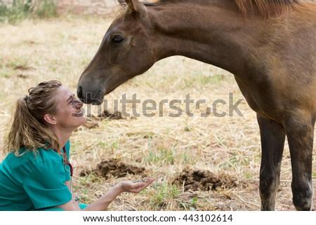 Veterinary I think feeding a horse on the farm - stock photo
