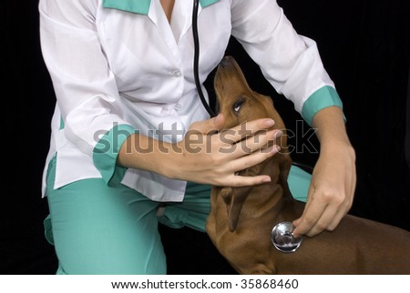 Veterinary inspect the sick dog - stock photo