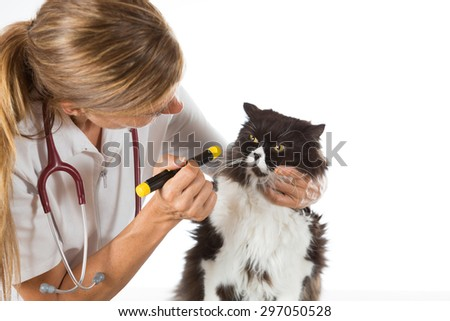 Veterinary inspecting the eyes of a cat in clinic - stock photo