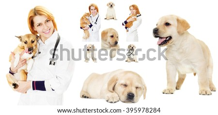 veterinary set - stock photo