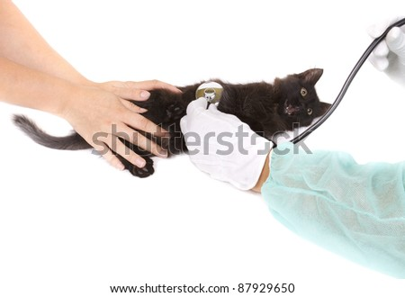 Veterinary taking care of a small cat