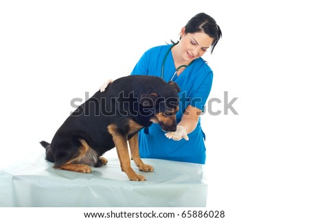 Veterinary woman giving a pill to a dog on table - stock photo