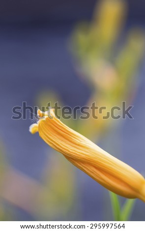 Vibrant background made with macro image of a yellow flower - stock photo