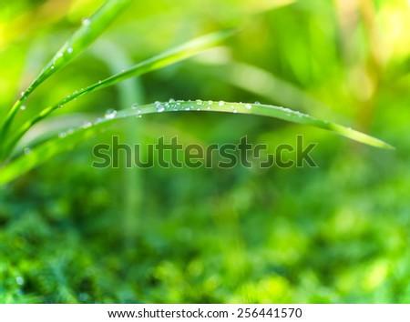 Vibrant beautiful sunny grass green background. - stock photo