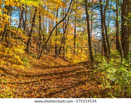 Vibrant changing colors along this Pocono Mountains trail in Eastern Pennsylvania. - stock photo