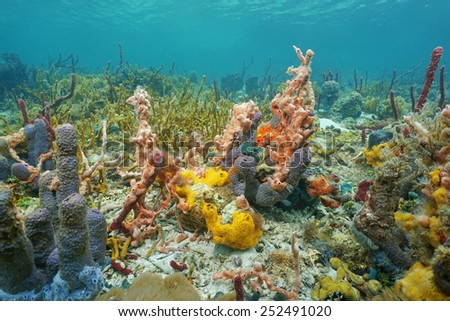 Vibrant colors of underwater life with sea sponges in a Caribbean coral reef, Central America, Panama - stock photo