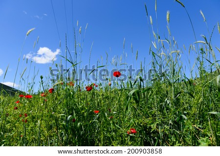 Vibrant field flowers against blue sky - stock photo