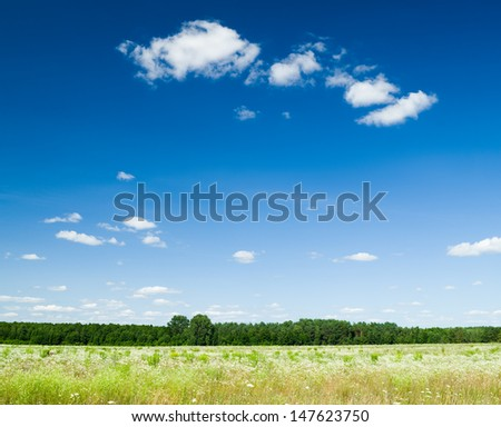 Vibrant field of wildflowers and forest - stock photo