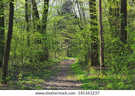 Vibrant green foliage in the forest in spring
