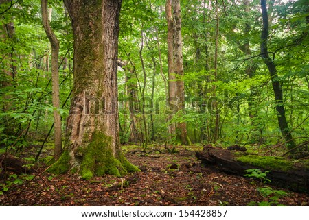 Vibrant, green forest with lots of trees and bushes and fallen trees and foliage on the ground