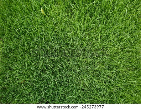 Vibrant green grass close-up background