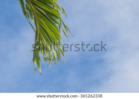 Vibrant green palm leaf against an blue and white sky backdrop. - stock photo