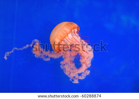 Vibrant Jellyfish - stock photo