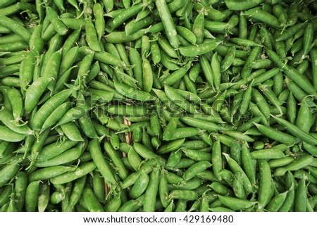 Vibrant organic green peas at the Oakland farmers market - stock photo