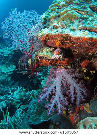 Vibrant pink soft Tree Corals - stock photo