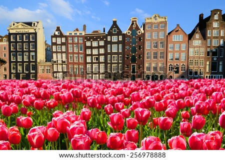 Vibrant pink tulips with canal houses of Amsterdam, Netherlands - stock photo